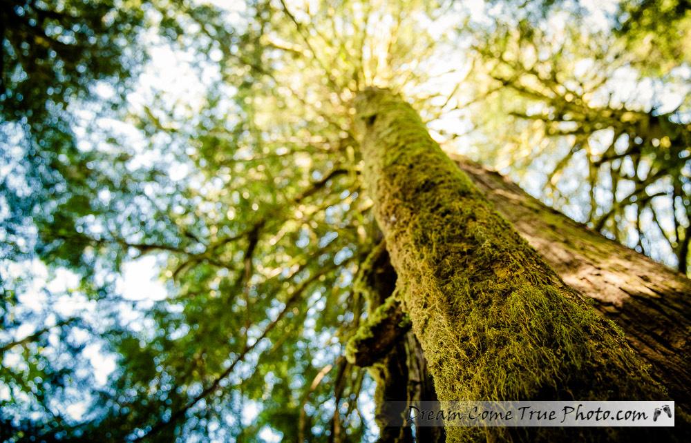 Dream Come True Photo Canadian Rainforest Vancouver Island Amazing facts